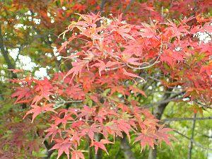 西丹沢自然教室の紅葉