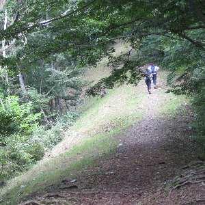 きれいに整備された防火帯を行く山岳マラソン練習者達